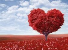 vita cuore