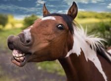 cavallo che ride